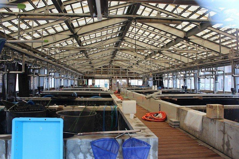 鮎や桜鱒などの淡水魚の育苗開発を行っている。ここはその親種の水槽