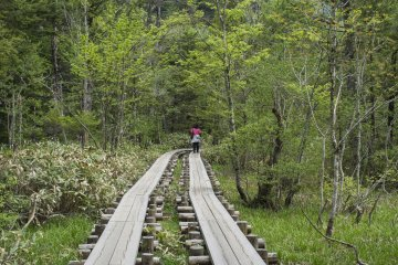 <p>Man-made tracks along the nature trail leading to various sightseeing points in Kamikochi</p>