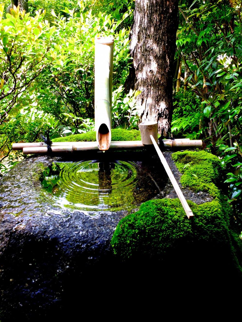 อ่างน้ำที่มีตะไคร่น้ำเกาะอยู่เต็มที่วัดไดโฮะ-อิน เป็นอ่างน้ำที่สวยงามเป็นอย่างยิ่ง