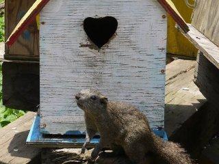 """""""В моём доме двери в форме сердечка!"""""""