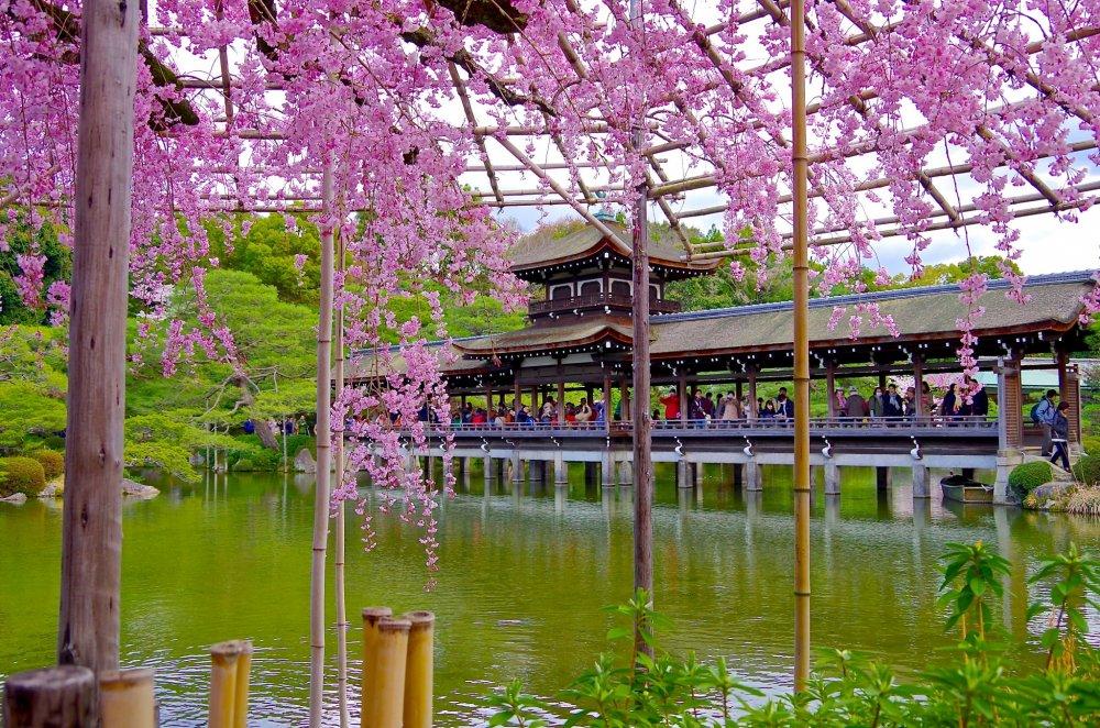 Le jardin de heian jing en juin kyoto japan travel for Hotel jardin de fleurs kyoto