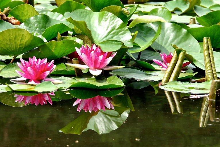 Le Jardin de Heian-jingû en Juin
