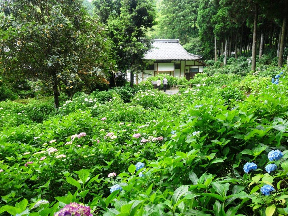 寺の奥にある庭は、彩りあふれている