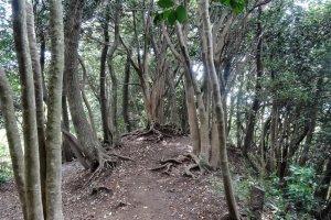 เส้นทางพระพุทธรูปไดบุทสึ (Daibutsu Hiking Course)