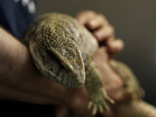 As beautiful as it looks! Ever tried holding a large lizard in your hands?