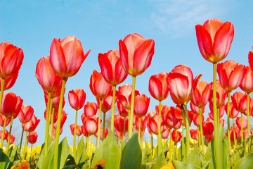 ศูนย์ดอกไม้คาไซ