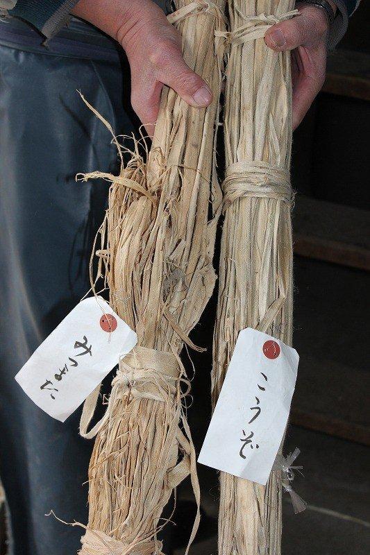 越前和紙の原料となる「こうぞ」「みつまた」。最近は国産原料だけでは足りず海外からの輸入品が多い