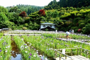 Irises Garden at Daian-zenji Temple