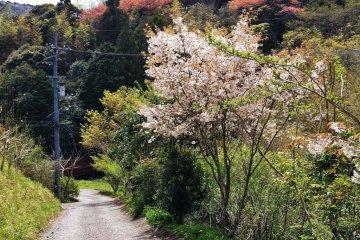Walking around Wakamiya Onsen