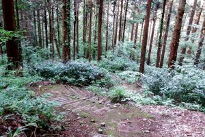 From the cemetery of Fukui Matsudaira Clan, you go down the hill...