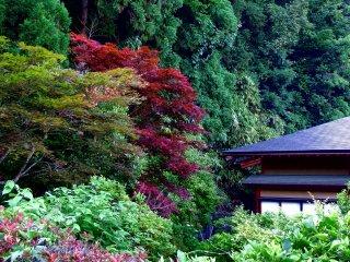 Зеленые и красные листья в саду в храме Дайандзэндзи, Фукуи