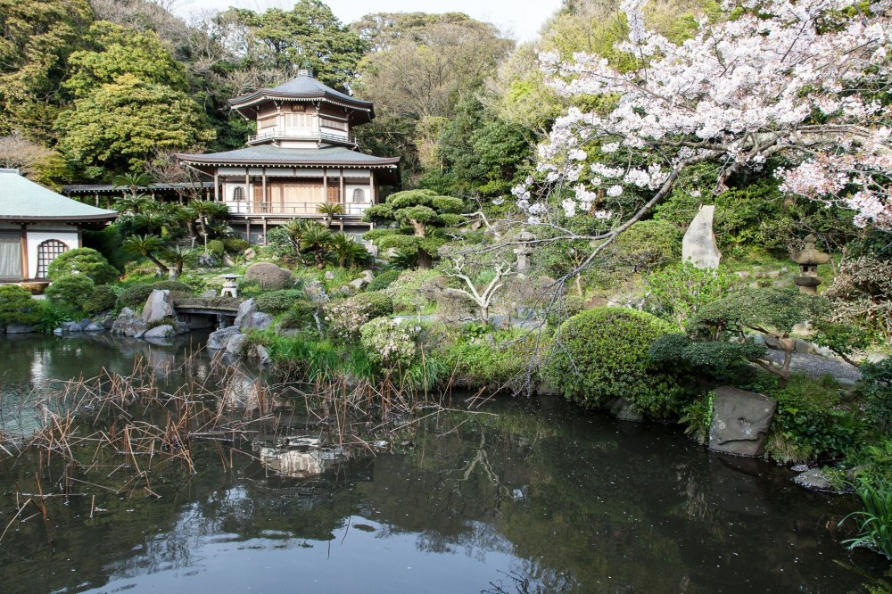 Le jardin et la mare aux lotus au printemps