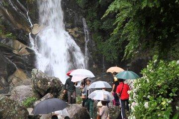Hydrangea Festival at Mikaeri Falls