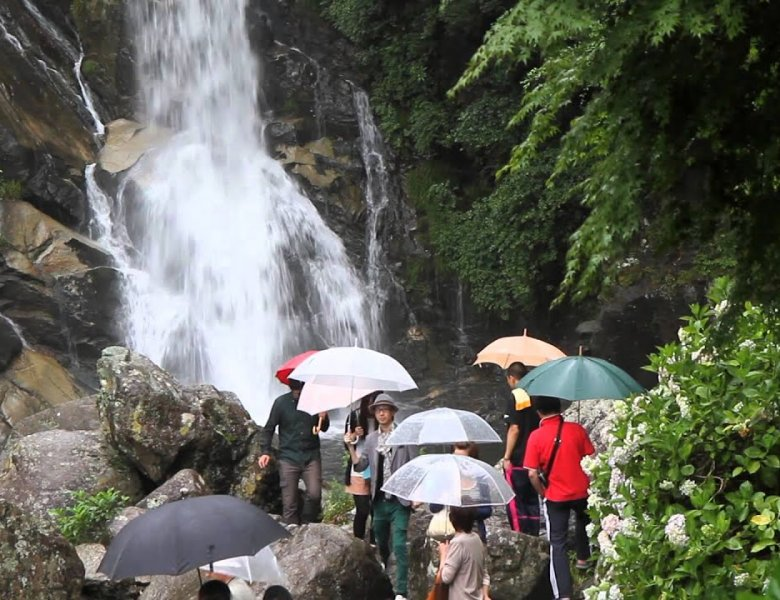 Festival de Hortênsias em Quedas de Mikaeri