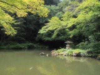 สระน้ำขนาดใหญ่ของสวนนาริตะ-ซาน หนึ่งในสถานที่ที่เงียบสงบที่สุด ที่ฉันเคยไปมา