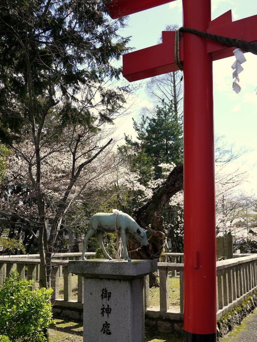 Statue of a deer beside a red torii