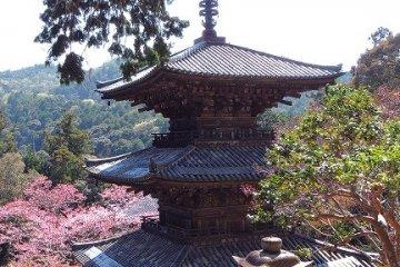 Ichijo-Ji Temple