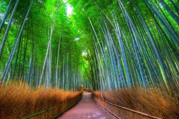 <p>Bamboo grove&nbsp;</p>