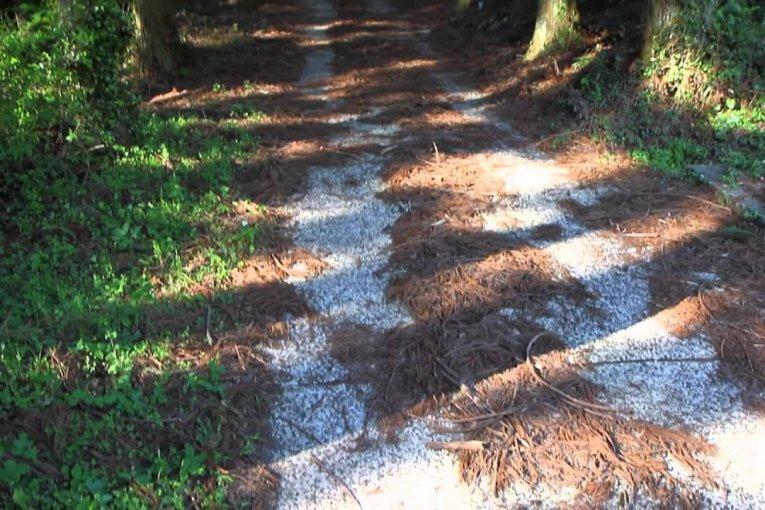 Caminhada de Primavera em Mitsuse
