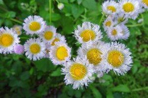 ดอกไม้ริมทางกอใหญ่ ชูดอกใบทักทายผู้มาเยือน