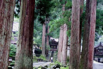 <p>Looking at &#39;Karamon (Chinese Gate)&#39; through tall, giant cedar trees</p>