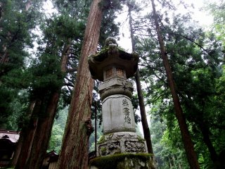 Tall stone lantern standing with giant cedar trees in the background