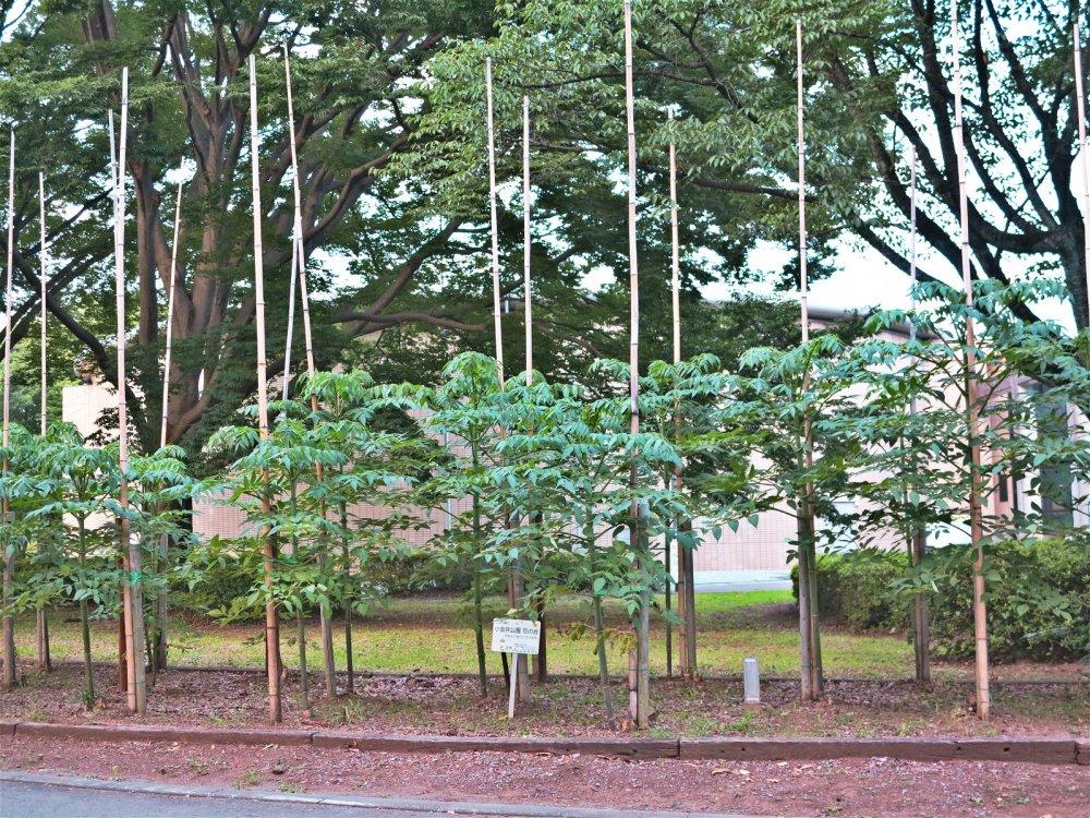 公园内的花木