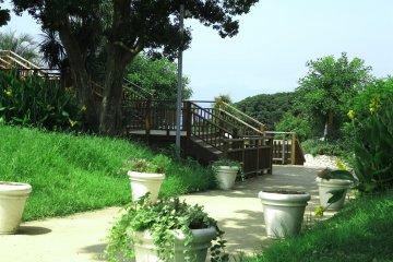 江之岛:植物园