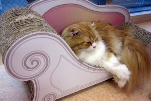 Kucing yang sedang bersantai di sofa