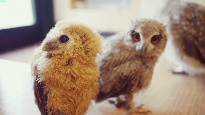 <p>Owls</p>