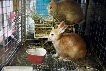<p>Rabbits enjoying their food</p>
