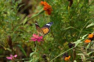 Kagoshima Butterflies