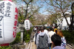 Dankazura with cherry blossoms