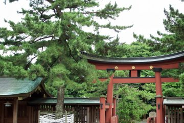 <p>Inner torii gate to the main hall, and pine trees</p>