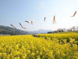 Creating Soba in Iiyama
