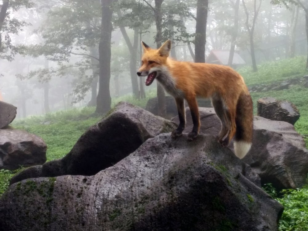 Calling all animal lovers! The Fox Village is not just unique to Japan, but to the whole world!