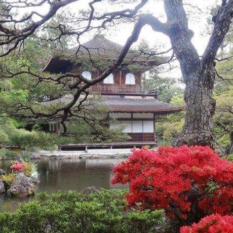 เดินชมสวนวัดกินคาคุจิ เกียวโต