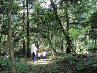 牧場の敷地内に広がる雑木林。原生林に近い