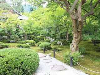 Enkoji's gardens have a striking beauty