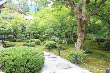 엔코지의 정원의 아름다움은 돋보이는 데가 있다
