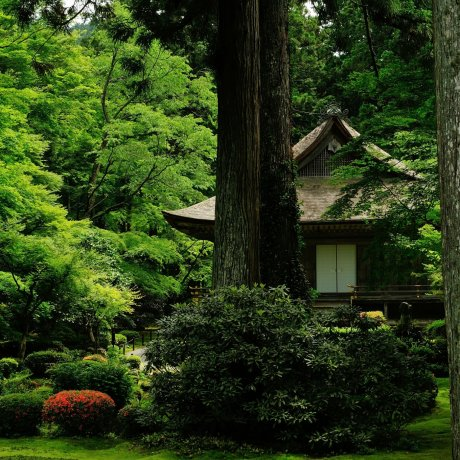 Lush Verdure of Ohara Sanzen-in