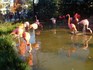 Les flamants roses du parc
