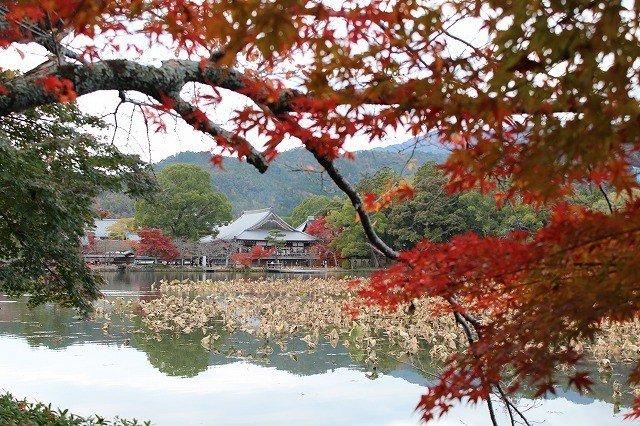 Pemandangan Daikakuji dari seberang kolam Osawa