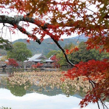 Mùa thu ở đền Daikaku