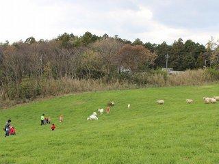 겨울철을 제외하고는 이 초원은 목초로 푸르스름하다