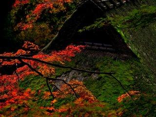 重要伝統的建造物群保存地区。これだけの苔に覆われた茅葺屋根、さすがに見事だ