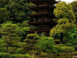 桧皮葺の屋根と木組みの美しさにため息が出そうになる
