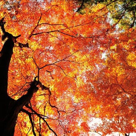 ألوان الخريف في كورانكي