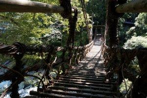 สะพานเถาวัลย์ ฉันต้องเดินผ่านเธอไปให้ได้