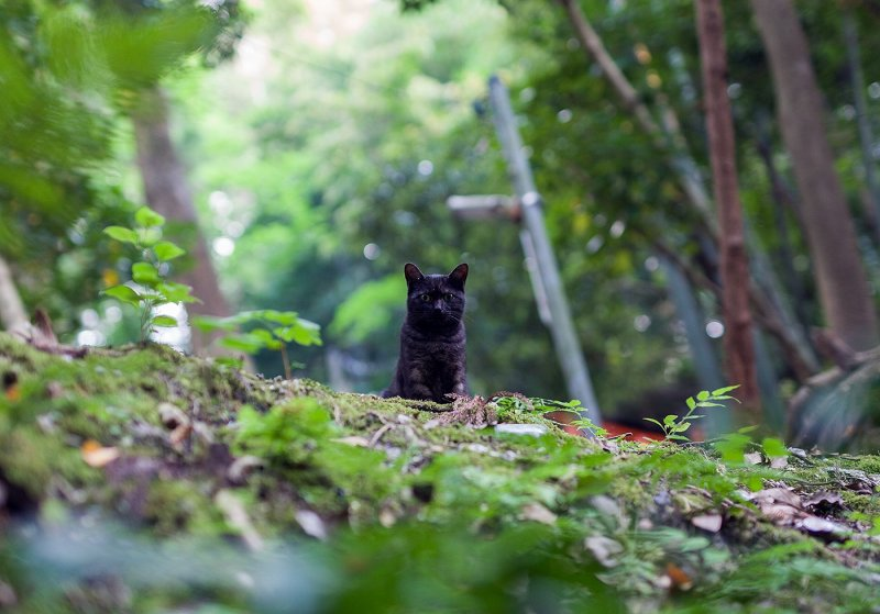 <p>Surprised, this black cat spotted me from the path above</p>
